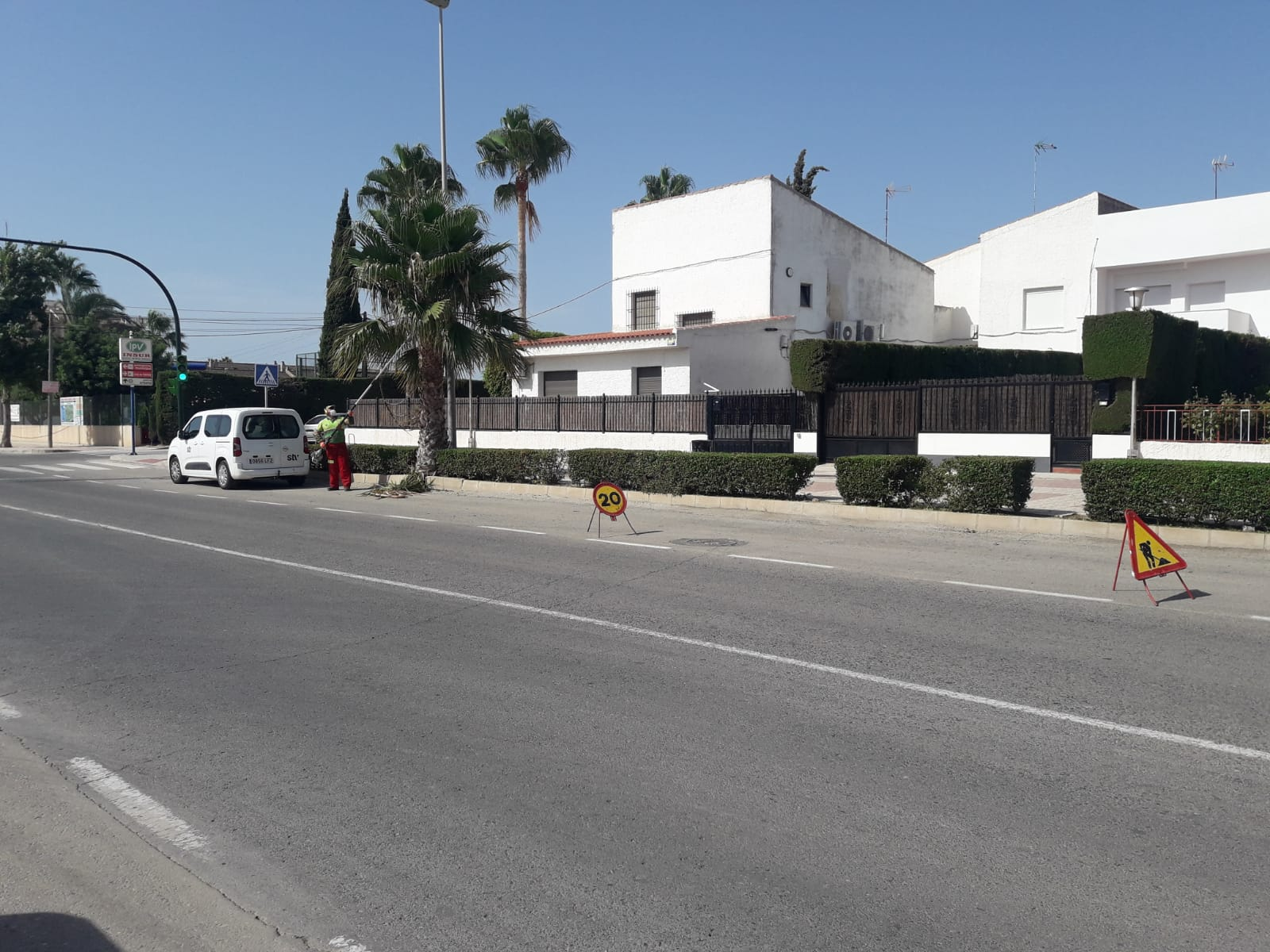 Poda de palmeras STV Gestión Torre Pacheco
