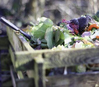 STV cómo hacer compost. Foto Pixabay