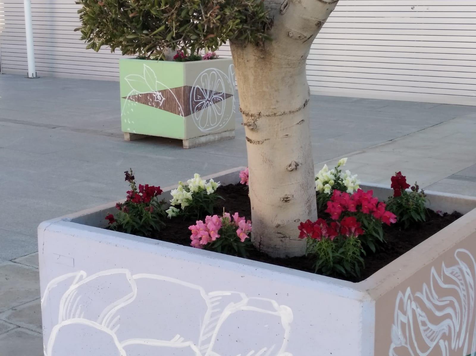 Plantas de flor otoño STV Gestión